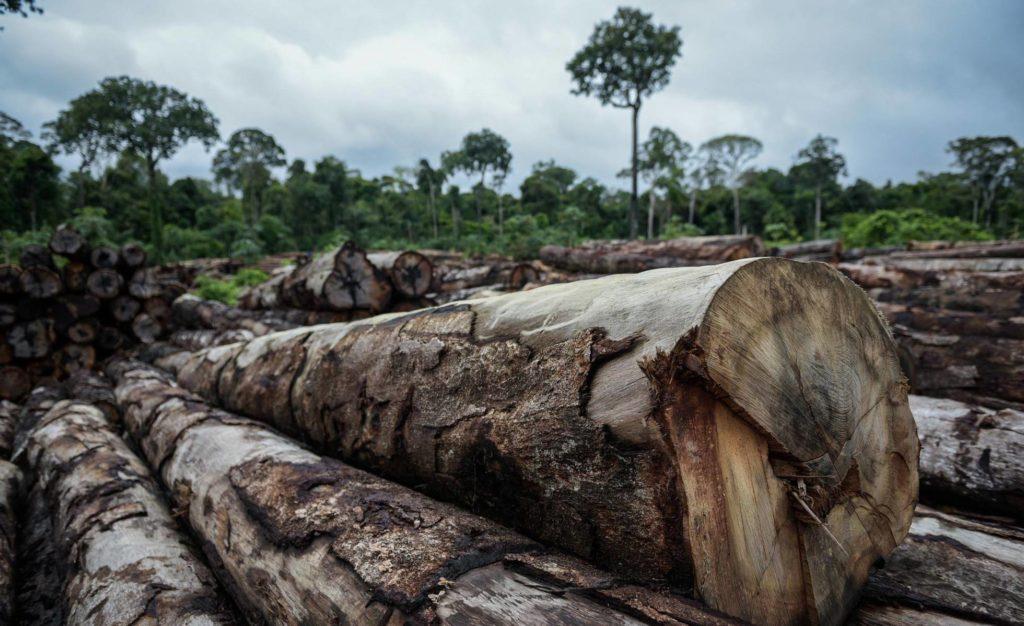 Madeira de extração ilegal apreendida em abril pelo Ibama Terra Indígena (TI) Pirititi, no sul de Roraima. (Foto: Felipe Werneck/Ibama/Reprodução do El País)
