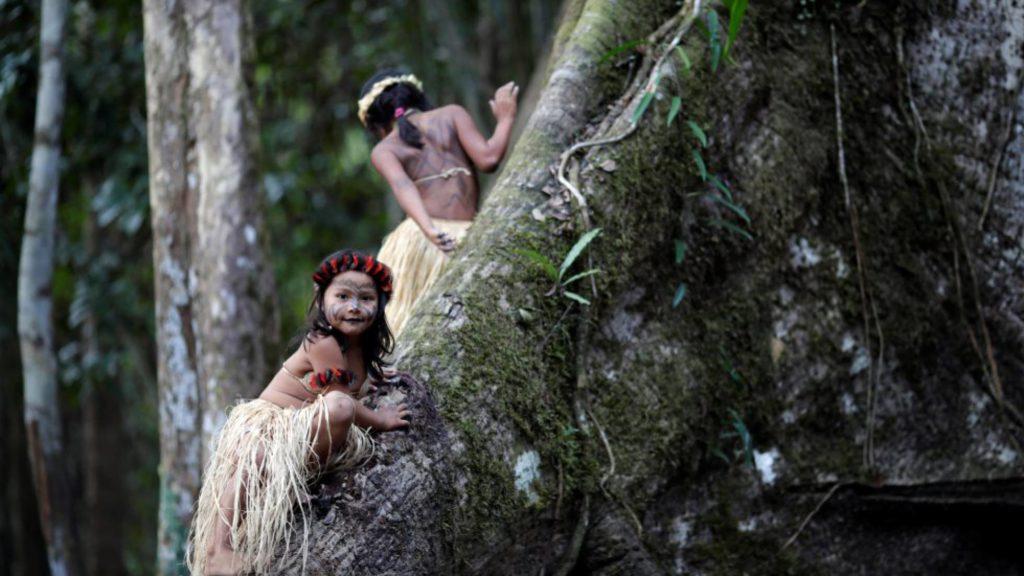 Dos niñas escalan un árbol de Sumauma en Feijó (Brasil). UESLEI MARCELINO REUTERS (Reprodução do El País)