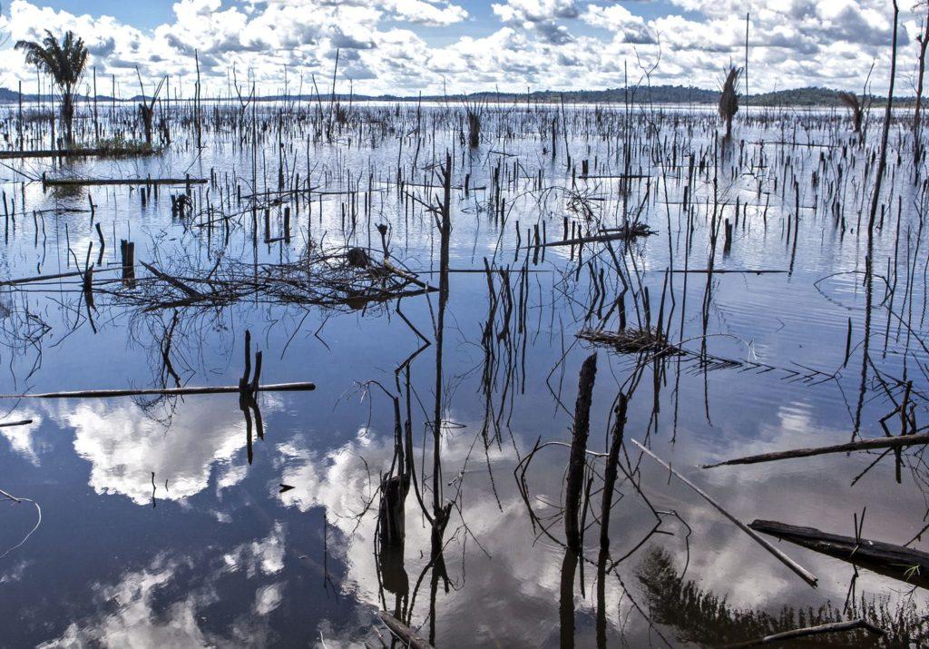 Árvores mortas no rio Xingu. LILO CLARETO (Reprodução do El País)
