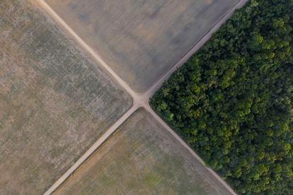 Un fragmento de la selva amazónica junto a campos de soja en Belterra, en el Estado de Pará, Brasil. LEO CORREA (AP - Reprodução do El País Espanha)